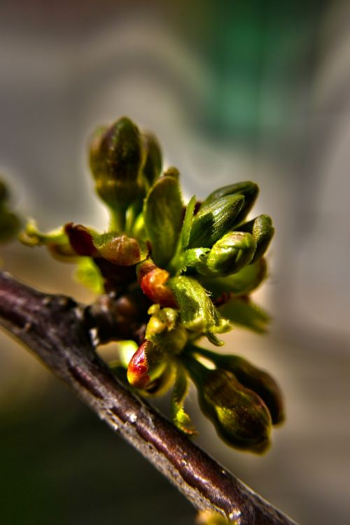 buds flower buds floral