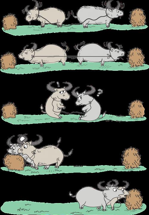 buffalo buffaloes pull