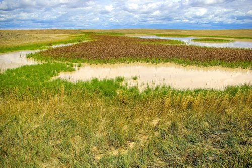 buffalo gap grassland  marsh  wetland