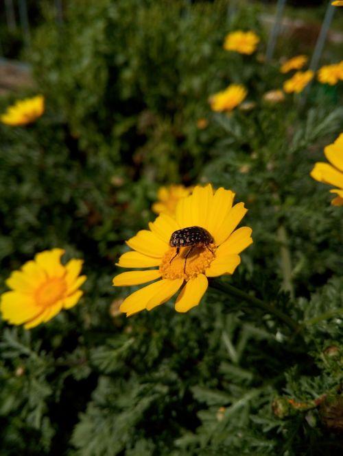 bug flower green