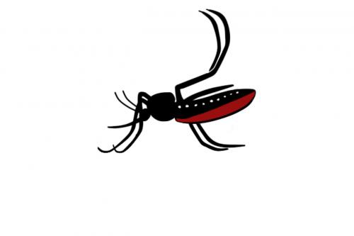 aedes aegypti disease zika
