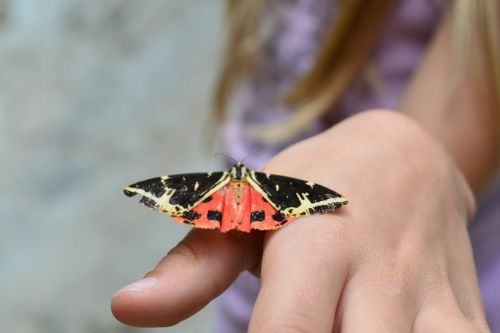 bug butterfly child hand