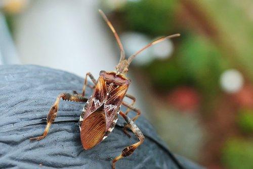 bug  box bug  animal