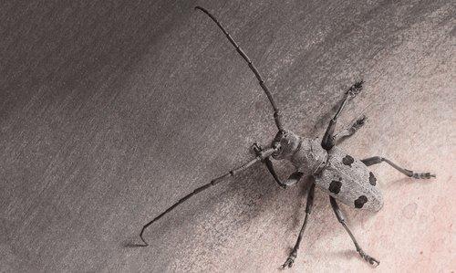 bug  bugs  art