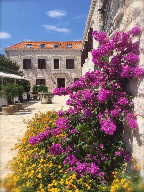 buganvilia flowers castle