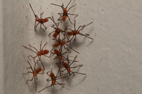 bugs  creepy  insects