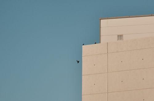 building sky birds