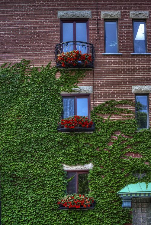 building exposed bricks flowers