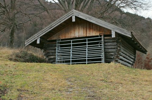 building shelter cattle shed