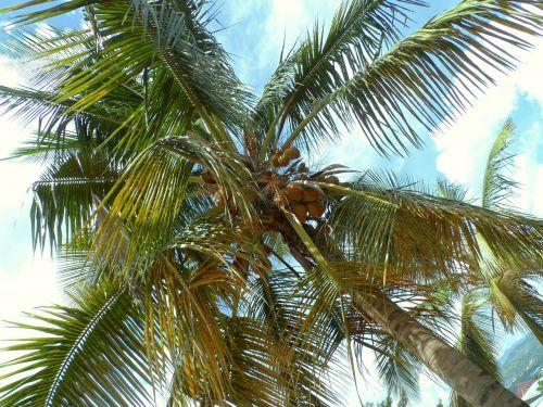 bujumbura burundi palm tree