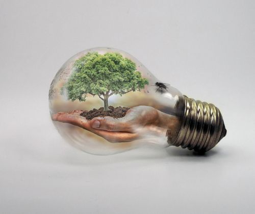 bulb nature ecologycurrent
