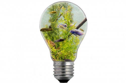 Bulb And Fish