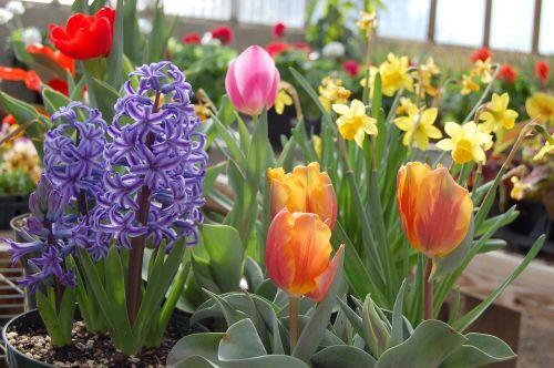 bulbs flowers spring
