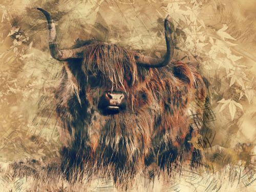 bull landscape nature