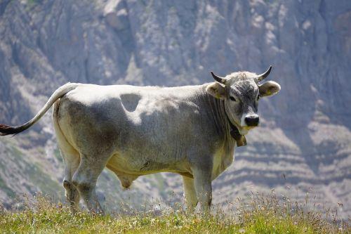 bull mountains bell