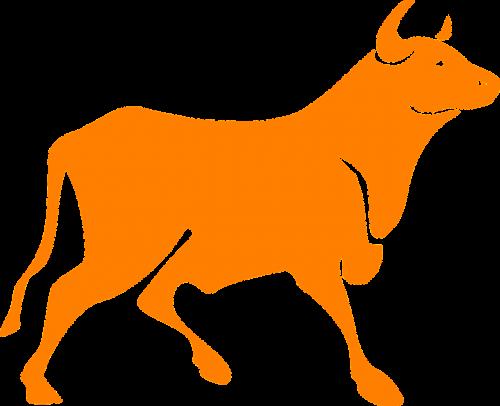bull cattle farm