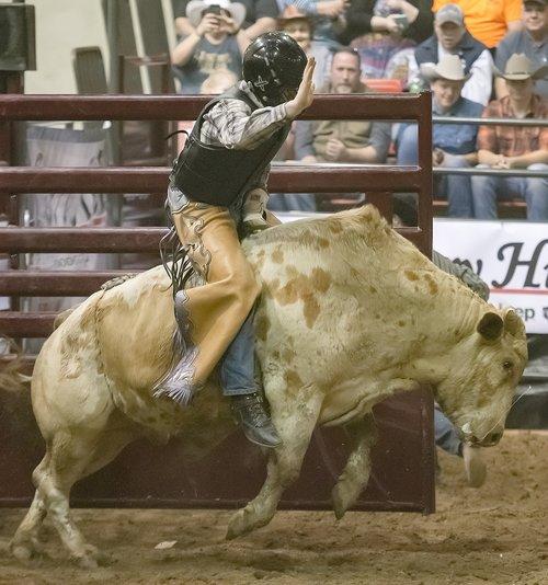 bull  rodeo  cowboy