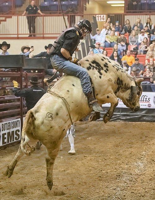 bull  bull rider  bull riding