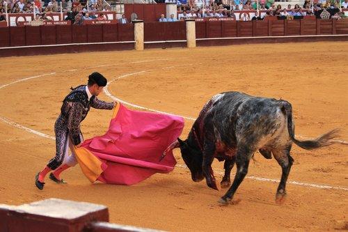 bull fighting  spain  torero