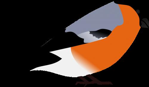 bullfinch finch bird