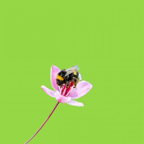 bumble bee bee bumble