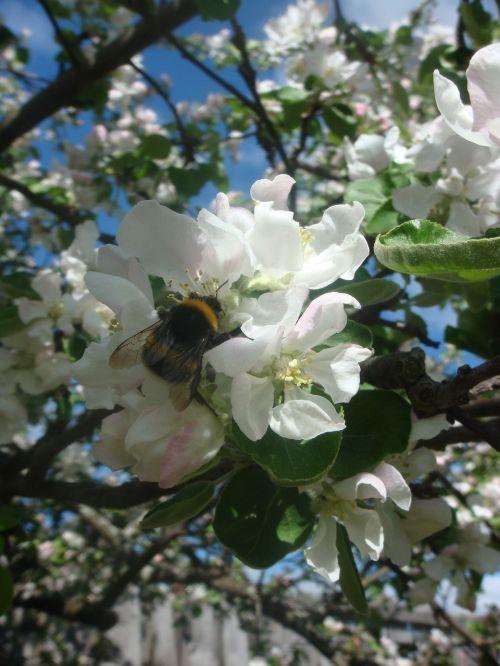 bumblebee garden gardening