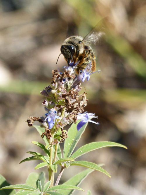 bumblebee flower libar flap
