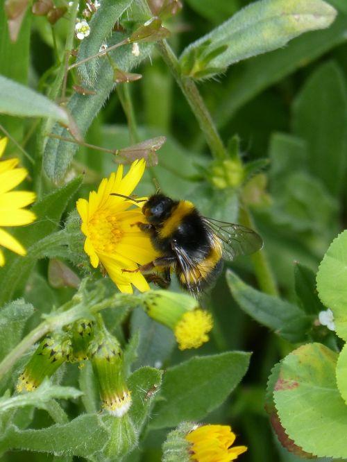 bumblebee drone libar