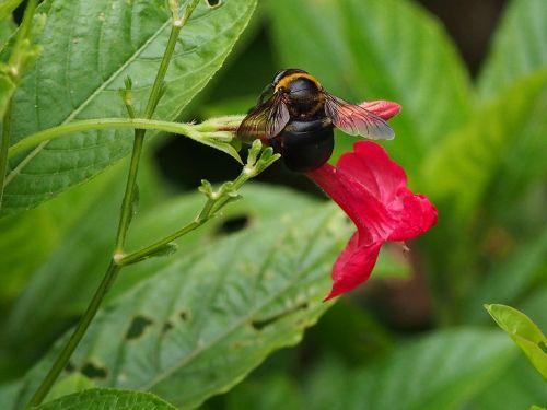 bumblebee adopt honey park