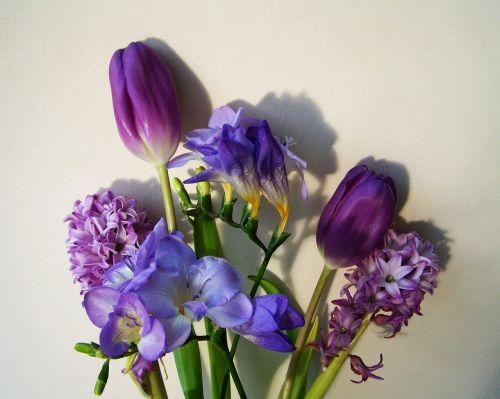 bunch of flowers bluish-purple colors cut flower