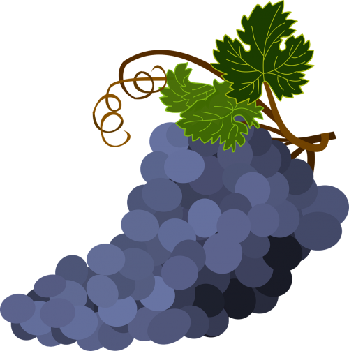 bunch of grapes grape leaves grapes
