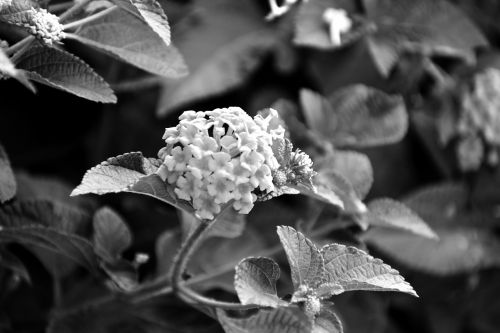 bunch of small flowers monochrome white flowers