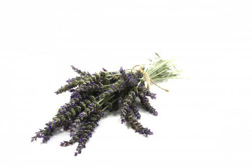 Bundle Of Fresh Cut Lavender