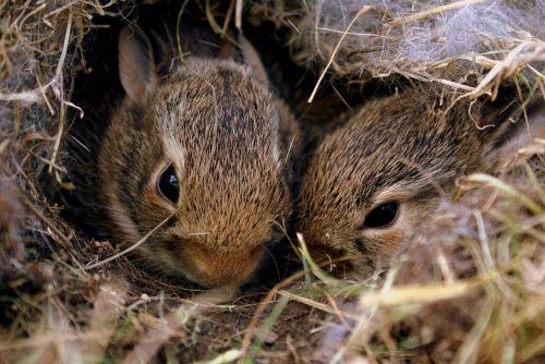 bunnies rabbits bunny