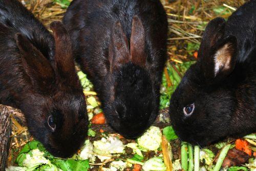 bunnies bunny rabbits