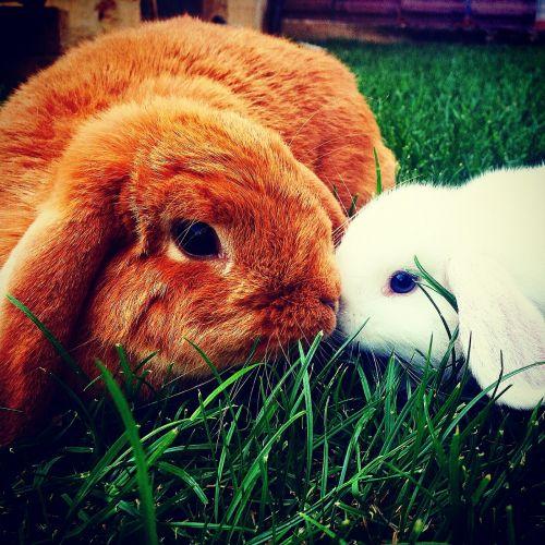 bunnies battering-ram cucciole