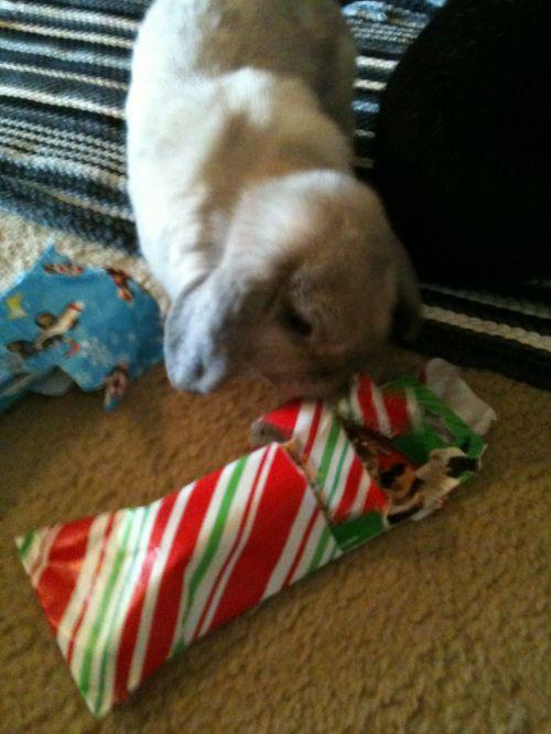 Bunnies Like Presents Too