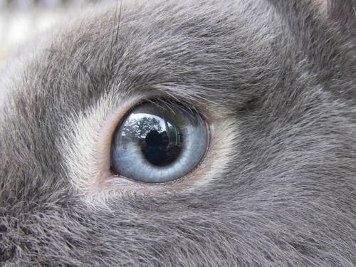 bunny rabbit netherland