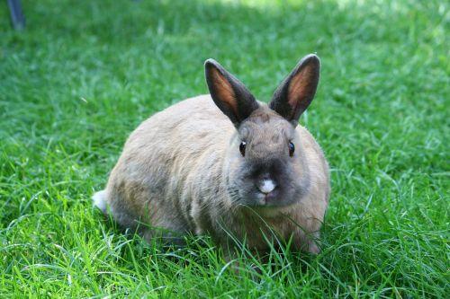 bunny lawn besame