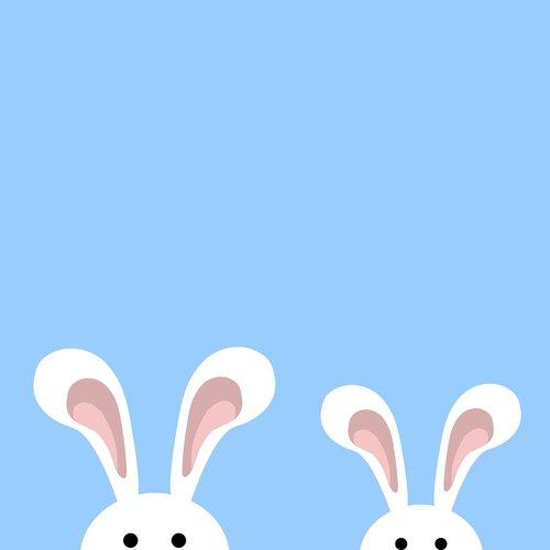bunny  little bunny  cute