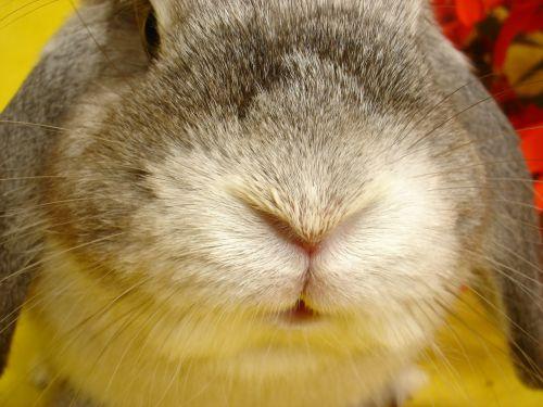 bunny animal my favorite