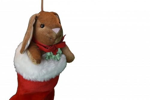 Bunny In A Stocking