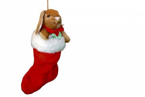 Bunny In Christmas Stocking