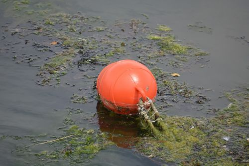 buoys water sea
