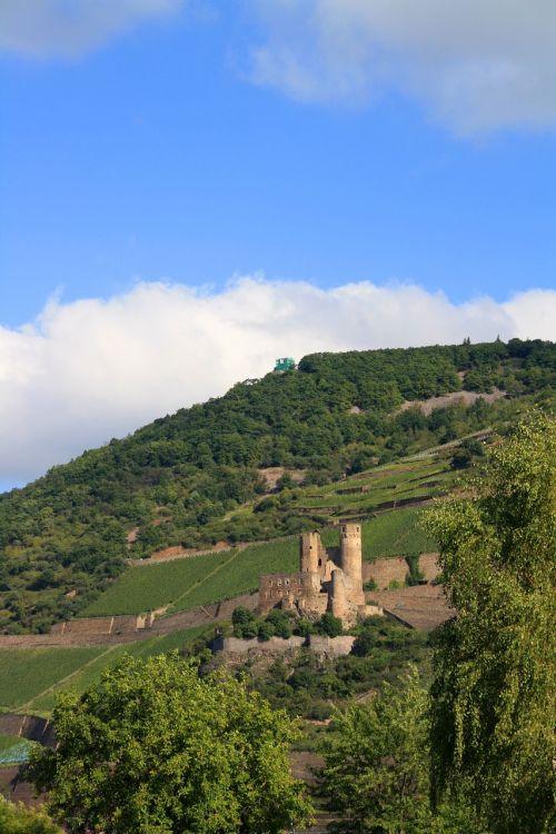 burg ehrenfels vineyard castle-bingen