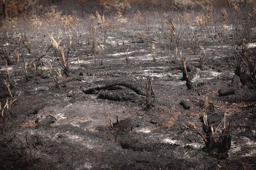 burned landscape fire