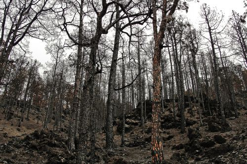 burnt forest fire forest