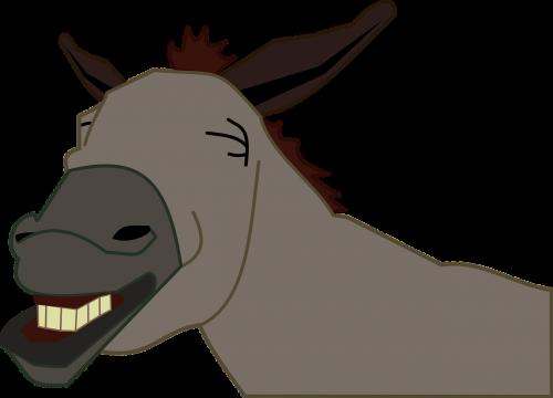 burro donkey jackass