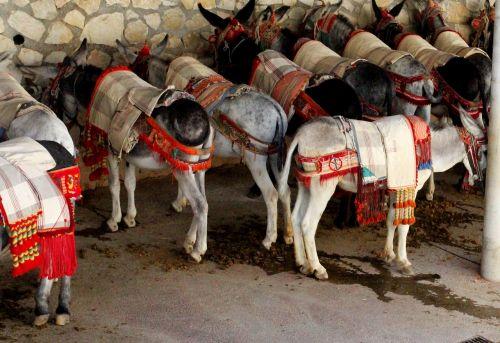 burros donkey beast of burden