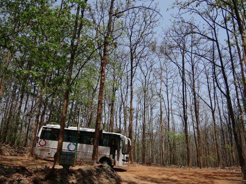 bus bus travel coach